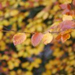A Change Like a Leaf on a Tree
